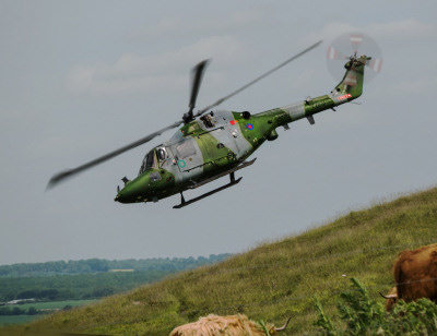 Photo Competition - Westland Lynx performing hill landings on Salisbury Plain, and the cattle never even looked up! Panasonic GX7. - Ian Porter