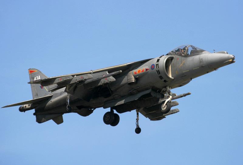Harrier.